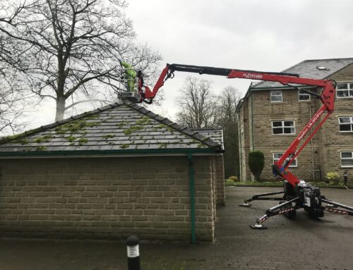 Roof Steam Cleaning